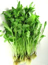 岩崎学園[フィットリア葦毛の里]がイタリア野菜を水耕栽培により、通年販売品ルッコラ・セルバティカ  1Kg