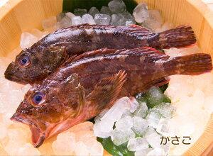 ブイヤベースを作る鮮魚セット 4〜5人前