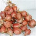 フランスの野菜 「不定貫」エシャロット フランス産 通年1Kg