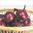 イタリアの野菜 「不定貫」トロペア 生食用赤たまねぎ1Kg不定貫
