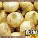 【少しわけあり】【送料無料】熊本県産 新たまねぎ 10kg【サラたま】SS10P03mar13