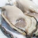 ★大粒新鮮冷凍サムライオイスタ—★坂越かき 冷凍殻付牡蠣10個(加熱用)[送料無料]★驚きのぷりぷりで美味しい牡蠣♪熱を加えても縮まない魔法の牡蠣。