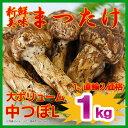 ワンランク上の高品質 【産地よりAIR便で入荷】中国産生鮮 松茸中つぼ(太いHAL)1kg