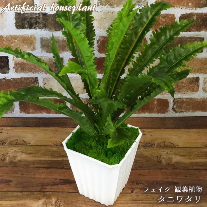 造花・人工観葉植物, 人工観葉植物  AGP