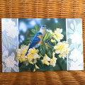 USAPumpernickelPressバースディカード超大判シャクナゲと青い鳥BluebirdsinRhododendron