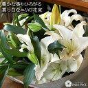 花 ギフト 花束 ユリ カサブランカ 誕生日 結婚記念日 お祝い プレゼント 記念日 フラワーギフ...