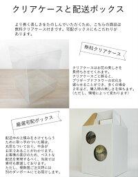 クリアケースと配送ボックス