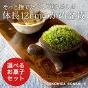 翠松園 撰 盆栽(ミニ盆栽 bonsai ボンサイ)こけ盆栽(ミニ盆栽 bonsai ボンサイ かめ...