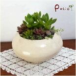 美濃焼手作り陶器植木鉢令月
