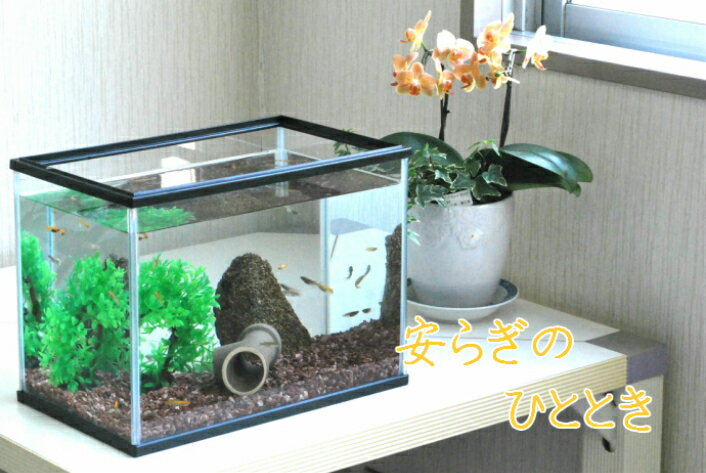 【インテリア水槽10点セット】 めだか&飼育用品10点セット カラーMサイズ