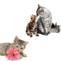 【猫用シャンプー】マイキャットシャンプー250ml甘いストロベリーフィズの香り(バイオガンスBIOGANCEシャンプートリートメントコンディショナーケア用品抜け毛消臭猫ねこネコ猫用品ペットペットグッズペット用品)