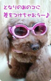 【犬用ゴーグル】ドグルズ(ピンク)(犬いぬイヌペットめがねメガネサングラス紫外線カット粉じんカット黄砂カット目の健康予防)