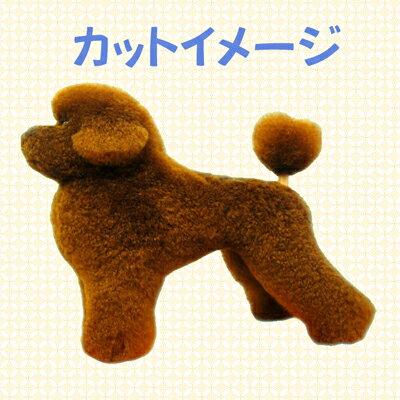 【グルーミング レッスン ドッグ パピー】 テディベアスタイル プードル 127レッド
