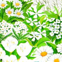 何が咲くのか楽しみ!白色のお花のミックス♪【シーズン限定10%OFF!】■タネ■花の絵の具ホワ...