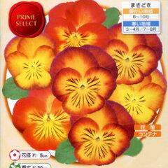 パンジー【シーズン限定10%OFF!】■タネ■パンジー虹色スミレメープル0.1ml入り