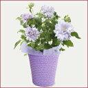 【送料無料!日付指定可!】■母の日ギフト鉢花■クレマチス ベル オブ ウォーキン…