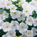 花苗ペチュニア■新鮮花壇苗■ペチュニアギュギュ ホワイト9cmポット