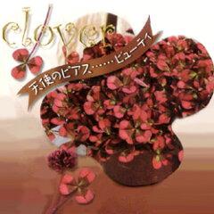 季節の花苗■見元 クローバー■クローバー 天使のピアス ビューティー9cmポット苗