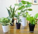 再販決定!5号鉢も入ってこの価格!【送料無料】■観葉植物■観...
