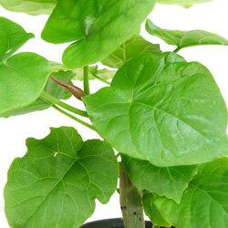観葉植物選んで3鉢セット