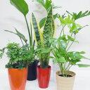 観葉植物おまかせ5鉢セット!