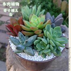 多肉植物アレンジ■多肉植物■ 多肉植物アレンジ 鉢色が選べる!多肉植物の寄せ植え 中味は...