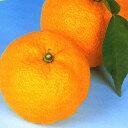 季節のユズ苗【送料無料】■良品果樹苗■ホンユズ6号鉢