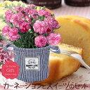 ■母の日ギフト鉢花■スイーツ付きカーネーション オリジナル麻...