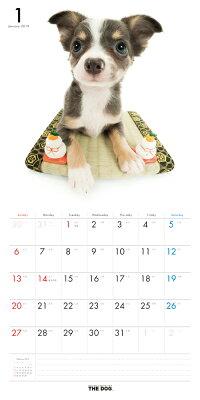【送料無料】期間限定THEDOGカレンダー2016チワワ