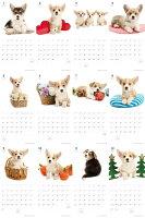 【カード決済メール便送料164円】期間限定THEDOGのアーリスト社製ミニカレンダー2016ウェルシュ・コーギー