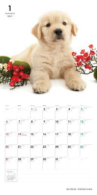 【カード決済メール便送料82円】期間限定THEDOGのアーリスト社製ミニカレンダー2016ゴールデン・レトリーバー