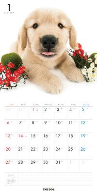 【送料無料】期間限定THEDOGカレンダー2016ゴールデン・レトリーバー