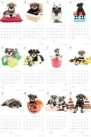 【カード決済メール便送料164円】期間限定THEDOGのアーリスト社製ミニカレンダー2016ミニチュア・シュナウザー