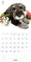 【送料無料】期間限定THEDOGカレンダー2016ミニチュア・シュナウザー