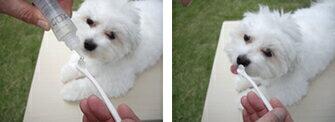 【デンタル】愛犬のオーラルケアにおすすめ!液状はみがき