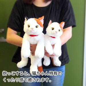 【猫ぬいぐるみ】サンレモンひざねこSBK(ブラック)