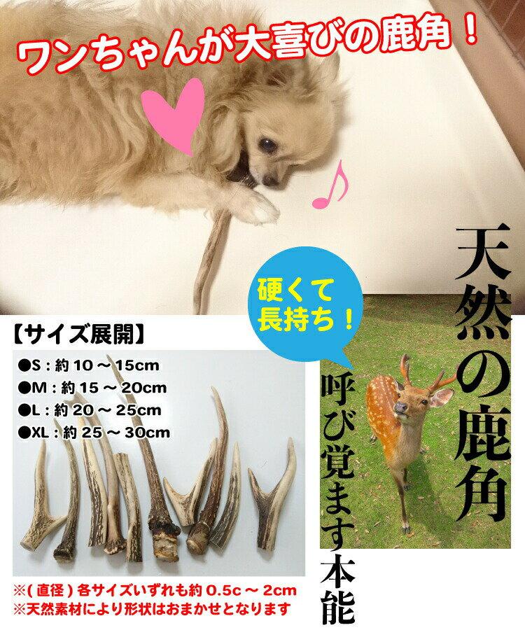 <メール便 >【形状おまかせ】国産 天然 鹿の角 犬(丹波鹿) 1本 サイズ:L (約20cm~25cm) 鹿のつの 犬 鹿角 シカ つの おもちゃ おやつ デンタルケア P2倍【DBP】