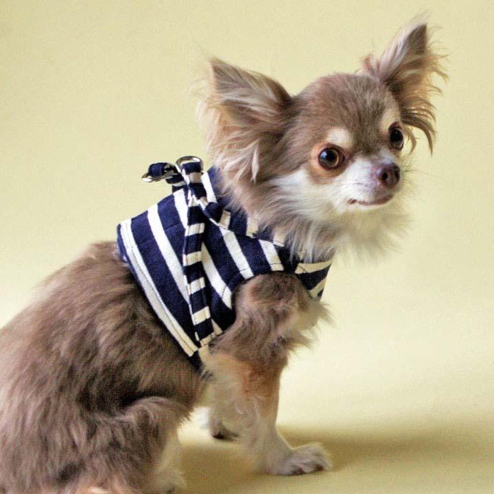 【エントリーでポイント9倍】ボディーハーネス アンカーボーダー 1号 484911 ハーネス 胴輪 犬 散歩 ドッグ ペット 犬と生活 レッド・ネイビー・ブルー・グリーン・ピンク【D】【B】 【メール便】 【代金引換、後払い決済不可・日時指定不可】 【MAIL】