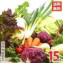 箱根南麓の伊豆の野菜セット 15品目 国産 無農薬 減農薬