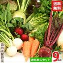 箱根南麓の伊豆の野菜お試しセット 9品目 国産 無農薬 減農