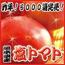 【わけ有り】丸かじり塩トマト 1Kg箱 【熊本県産】 - ピカイチ野菜くん