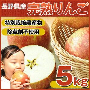 【りんご部門ランキング1位獲得】【国産 りんご】樹上完熟なので甘みが違う!「長野…