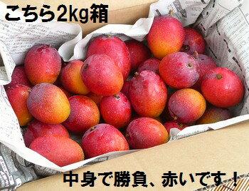 石垣島のミニマンゴー2kg入り約20〜30個、エコ箱入り送料無料冷蔵便発送