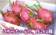 石垣島ドラゴンフルーツ「白」2kgエコ箱入り(4〜7個入)送料無料【smtb-MS】冷蔵便発送
