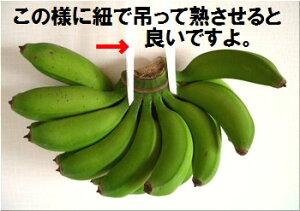 『島』で取れる本物の島バナナ石垣島だからこその自然の味爽やかな酸味と甘みのバランス輸入バ...