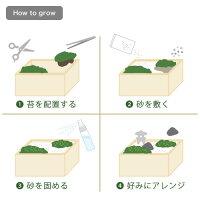 ミニ盆栽苔盆
