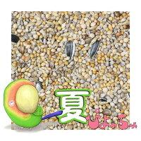 ぴちょっちゅラブマメ中型インコ夏用1kg