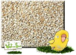 玄 ヒエ 500g×10 : 鳥の餌 えさ