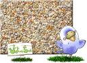 ぴよっちゅ 皮付きのエサ 20kg 紙袋入 : 鳥の餌 えさ