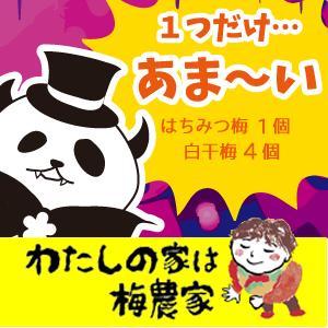 ハロウィン限定梅干おばけのパンダ ロシアンルーレット(1つだけあまーい!)